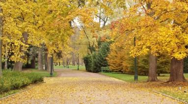 121112-fifty-shades-autumn-parc-la-tete-dor-bf88936713fd500eee09eeb249b9ed401