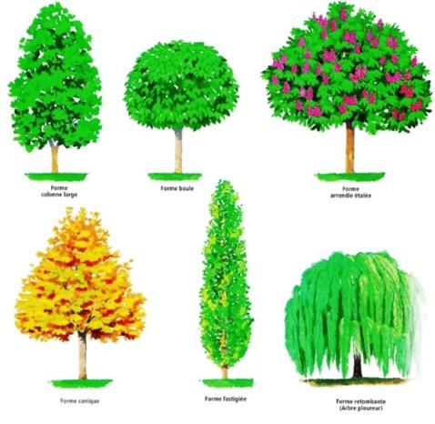 Les différentes formes d'arbres