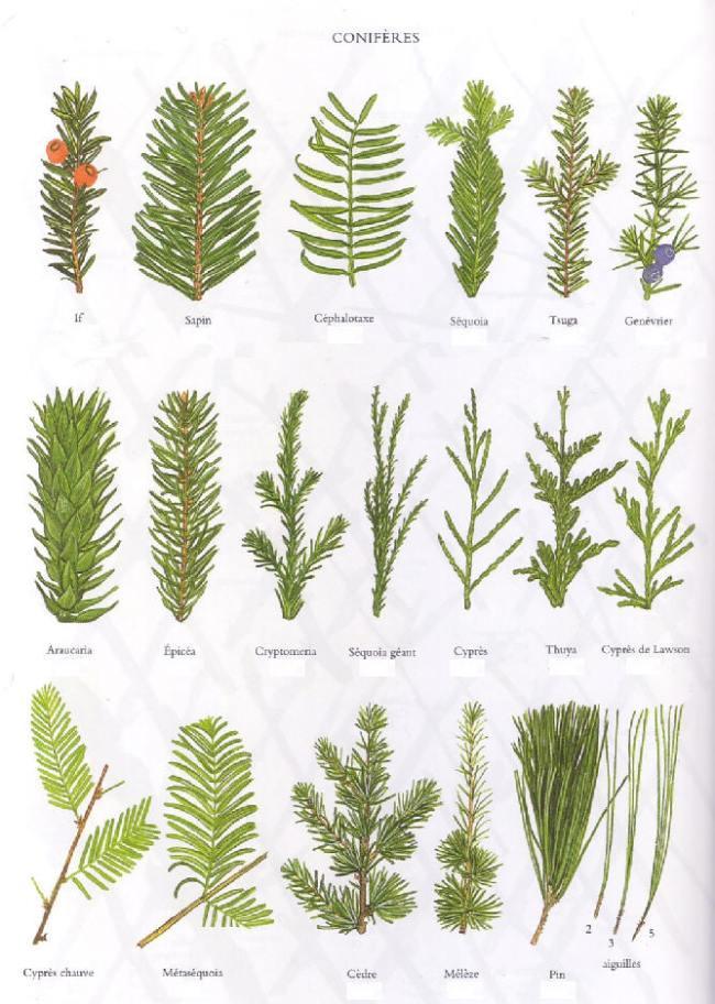 Exemples de feuilles