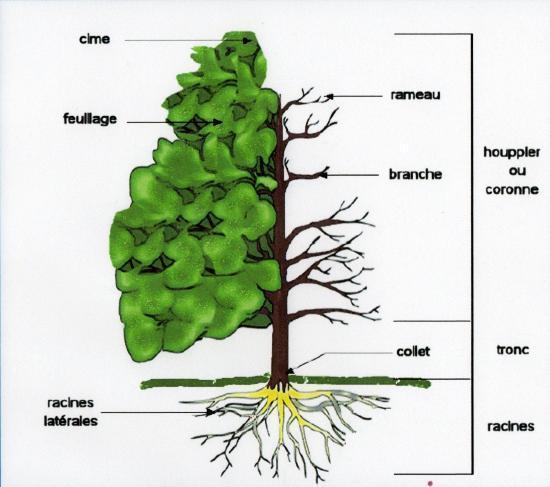Description d'un arbre