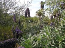 jardin botanique Barcelone 11