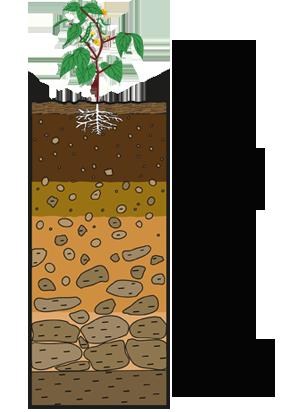 Les différents horizons d'un sol