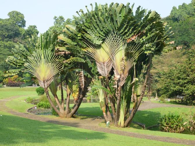 Plantes de climat doux la passion des jardins et de la nature - Plante exotique exterieur resistant au froid ...