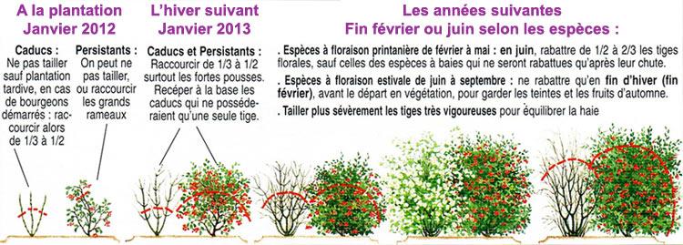 La taille de haies la passion des jardins et de la nature - Comment passer en floraison ...