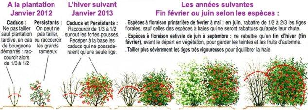 Haie libre ou haie variée fleurie