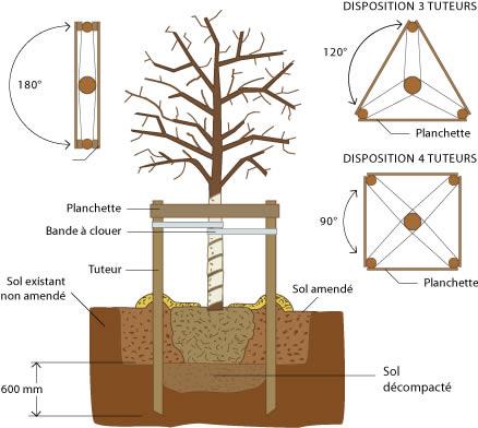 Plantation la passion des jardins et de la nature - Plantation arbre en motte ...