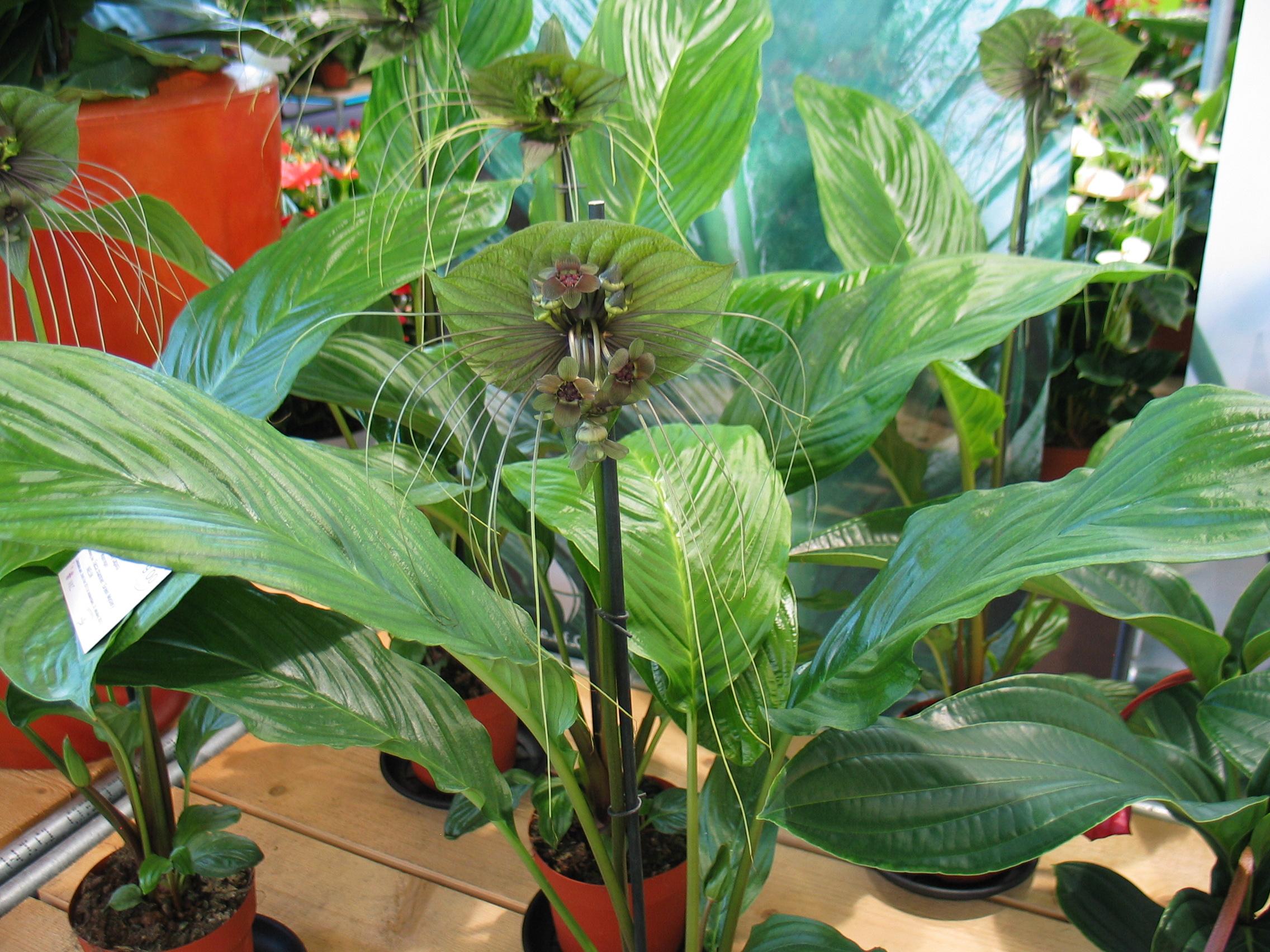 plante exterieur hiver plante exterieur resistant au