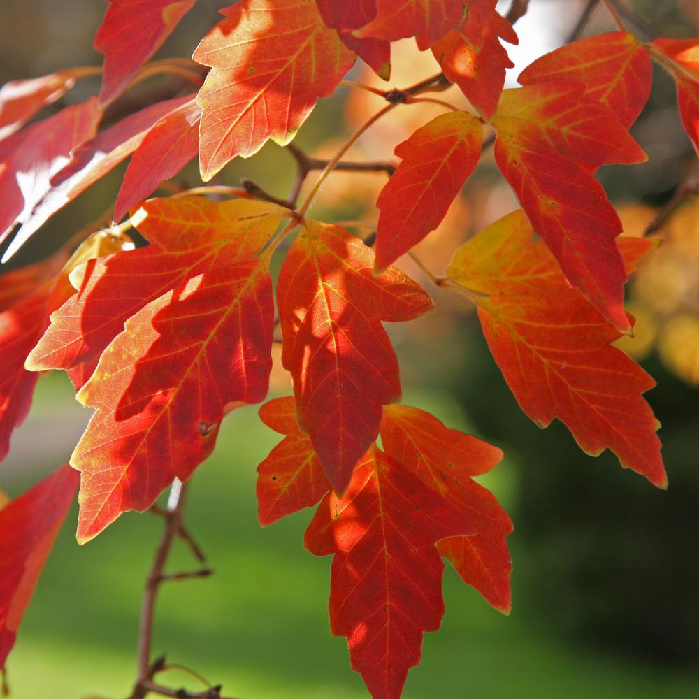 taille des arbres en automne