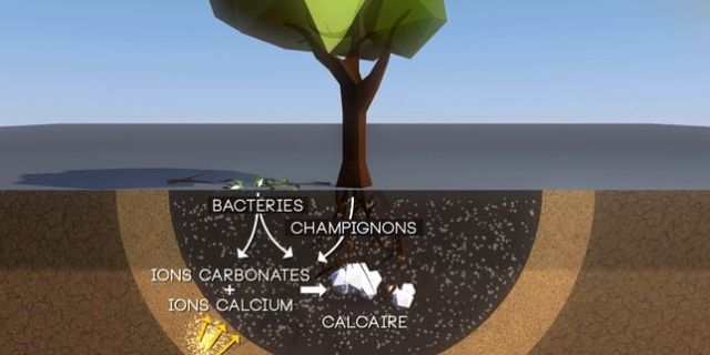arbres-sauveurs-stockent-dioxyde-carbone-6tf